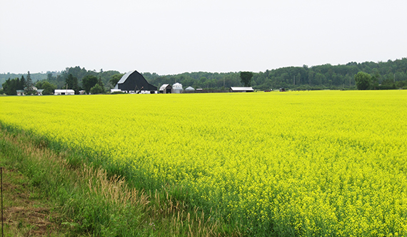 The Algoma Rural Agri-Innovation Network (RAIN) is a project of the
