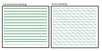 diagram of cross-seeding vs conventional